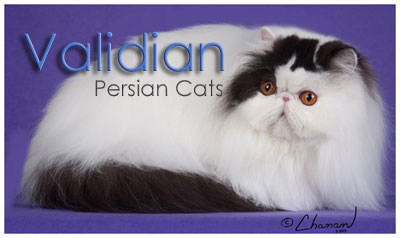 Validian Cattery