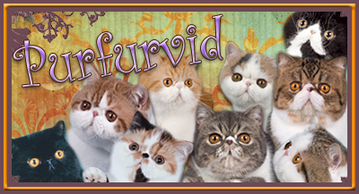Purfurvid Cattery